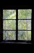 pic of cobweb  - Looking out cobweb and dust covered window from inside an old abandoned house inside the room is dark - JPG