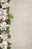 image of apple blossom  - Border of pink apple blossoms row with linen background - JPG