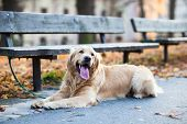 stock photo of bitches  - Cute dog waiting patiently for his master on a city street - JPG