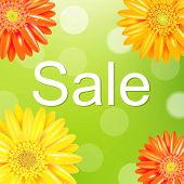 stock photo of gerbera daisy  - Sale Poster With Gerber - JPG