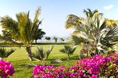 pic of mauritius  - Golf resort in a beautiful nature at the island of Mauritius - JPG