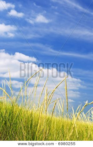 Tall Grass On Sand Dunes