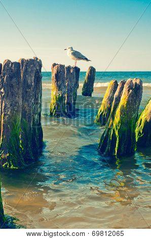 Seagull On Stump