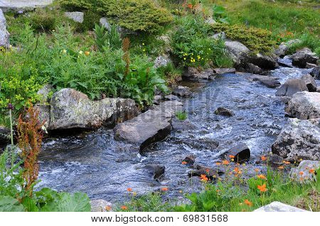 Stream In The Rila Mountains