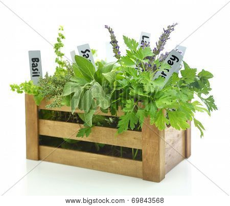 Fresh herbs with name tags in wooden box