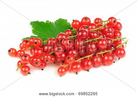 Redcurrants Isolated On White Background