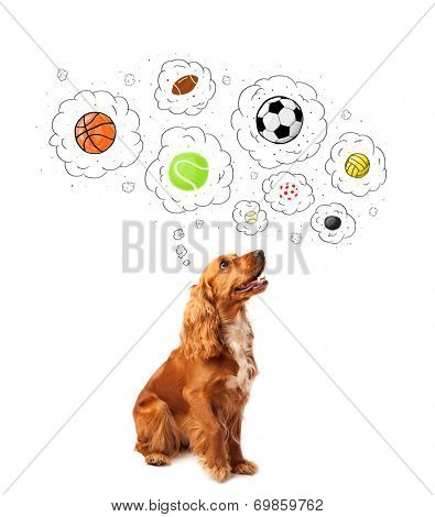 Cute cocker spaniel thinking about balls in thought bubbles above her head