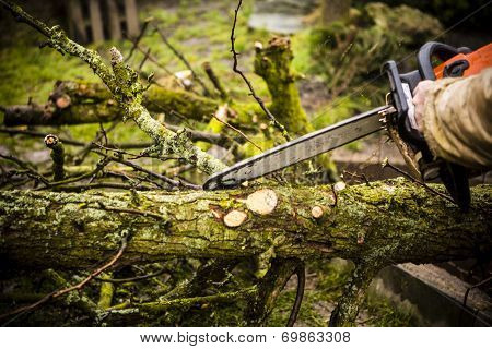 Man Sawing A Log In His Back Yard