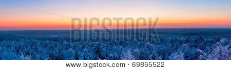 winter forest and sunset. colorful panoramic view