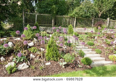 Rock garden with beautiful blooming kind of decorative garlic Star of Persia (Allium christophii)