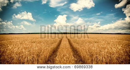 Road through wheat field. Landscape