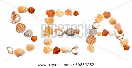 Text Sea Composed Of Seashells