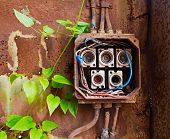 image of fuse-box  - Ceramic fuses in the old electric box and green ivy - JPG