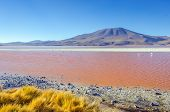 stock photo of eduardo avaroa  - Laguna Colorada - JPG
