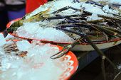 image of tiger prawn  - Big fresh tiger prawns on sell in the market - JPG