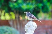 picture of robin bird  - This bird - JPG