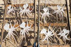 pic of kraken  - Drying octopus seen at the beach in Nazare - JPG