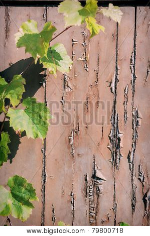 Rustic Background With Grapevine