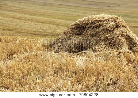 Haystacks In The Field