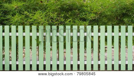 Green fence and bamboo tree