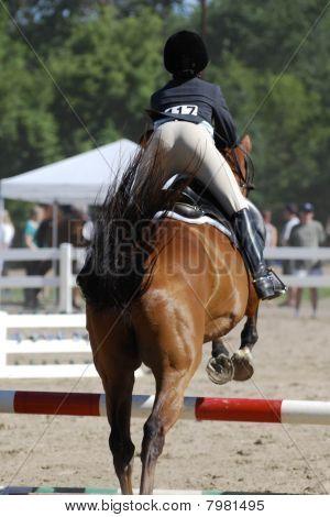 Horse Jumping #4
