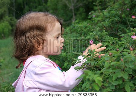 Little girl and flowers of wild rose.