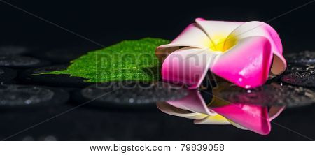 Spa Concept Of Green Leaf Hibiscus, Plumeria With Drops On Zen Basalt Stones In Reflection Water, Pa