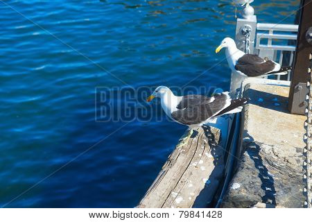 Two gulls resting in Cape Town harbour