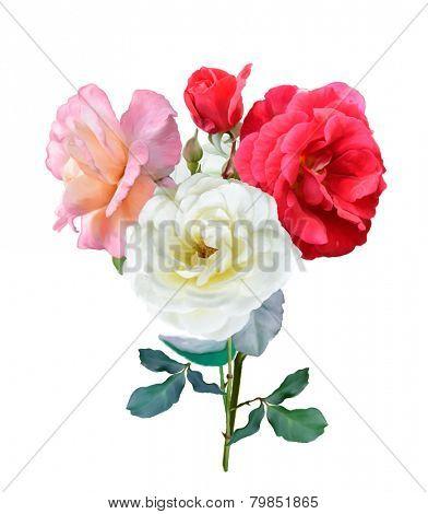 Digital Painting Of Rose Flowers