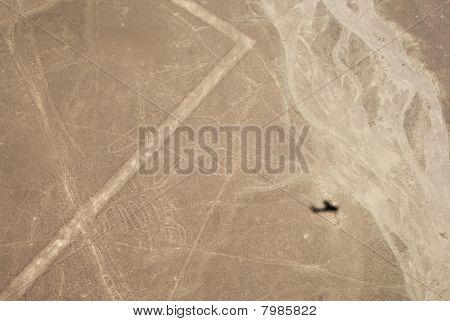 Whale, Nazca