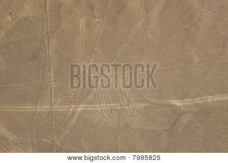 Dog, Nazca
