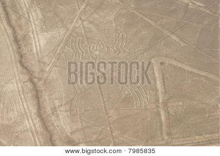 Spider, Nazca