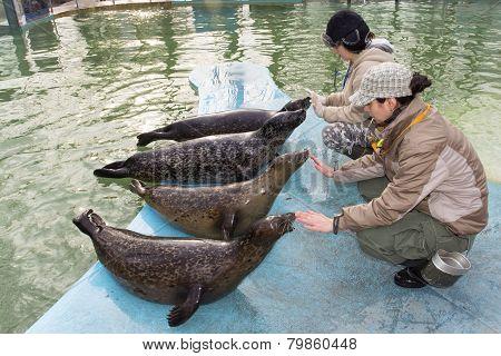 Harbour Seal (phoca Vitulina) Training