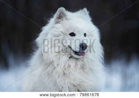Shaggy Dog Sitting On The Snow