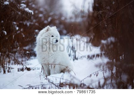 Large Shaggy Dog Sitting On The Snow