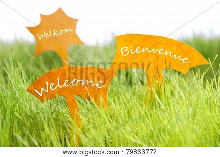 Three Labels With Welcome In Different Languages On Grass