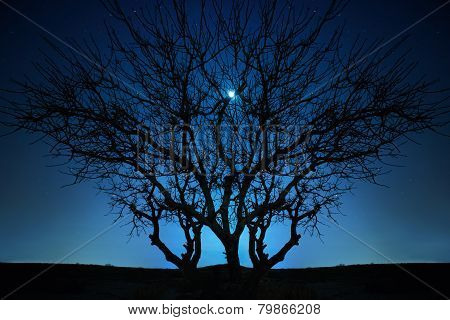 Lonely Tree Under Blue Night Sky