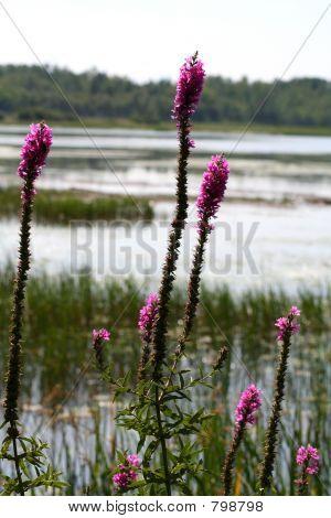Wild flowers or weeds