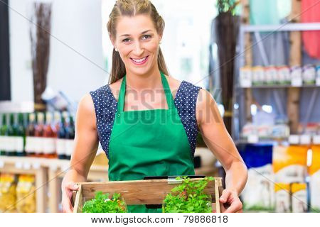 Organic Supermarket shop assistant filling up herbs storage racks in vegetable department