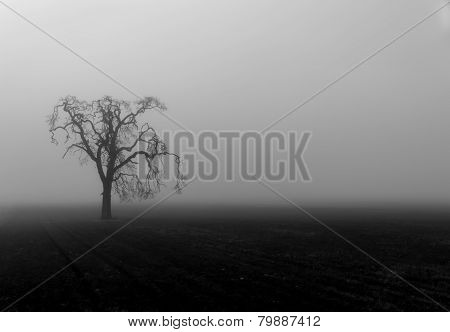 Fog shrouded tree