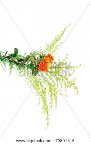 red-yellow flower on white background with grass