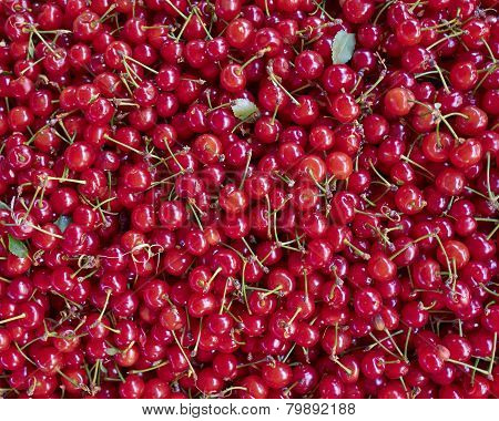 organic sour cherries closeup natural background