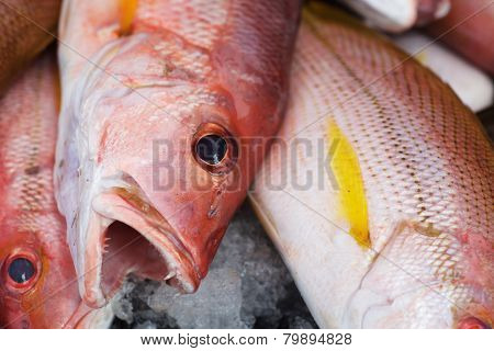 Background of fresh red bass fish