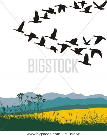 Migrating Geese In The Spring.eps