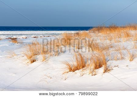 Golden Grass On The Snow-covered Beach