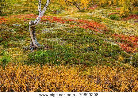 Autumnal colors