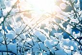 pic of view from space needle  - Snow and ice on branches. Winter time. ** Note: Shallow depth of field - JPG