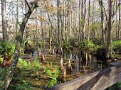picture of mile  - Natural Landscape at Six Mile Cypress Slough Preserve Fort Myers Florida