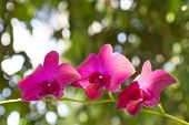 foto of greenhouse  - Beautiful pink orchid in the greenhouse.