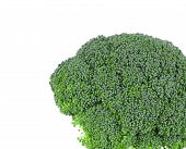 foto of cruciferous  - Fresh broccoli - JPG